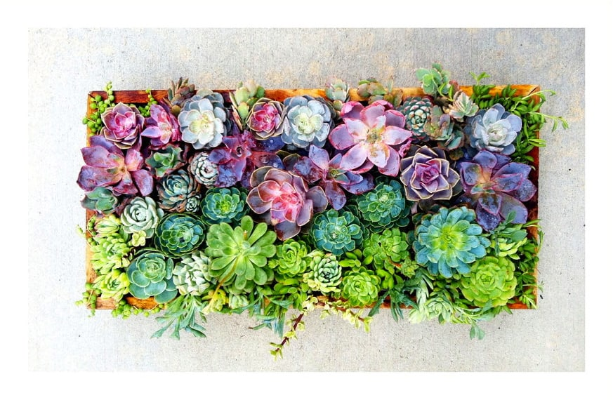 Succulent Windowsill Garden